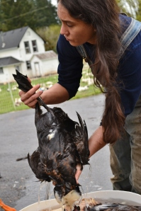 After scalding with soap the duck is placed in a cold bath for several minutes.